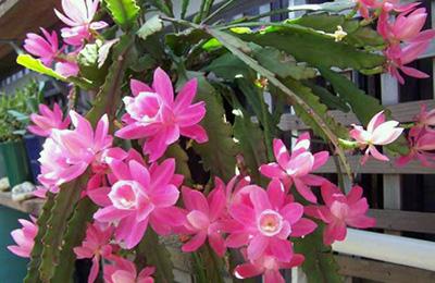 Образец растения