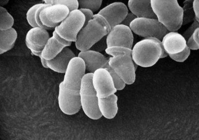 Грибки под микроскопом