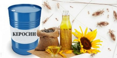Керосин и растительное масло от вшей