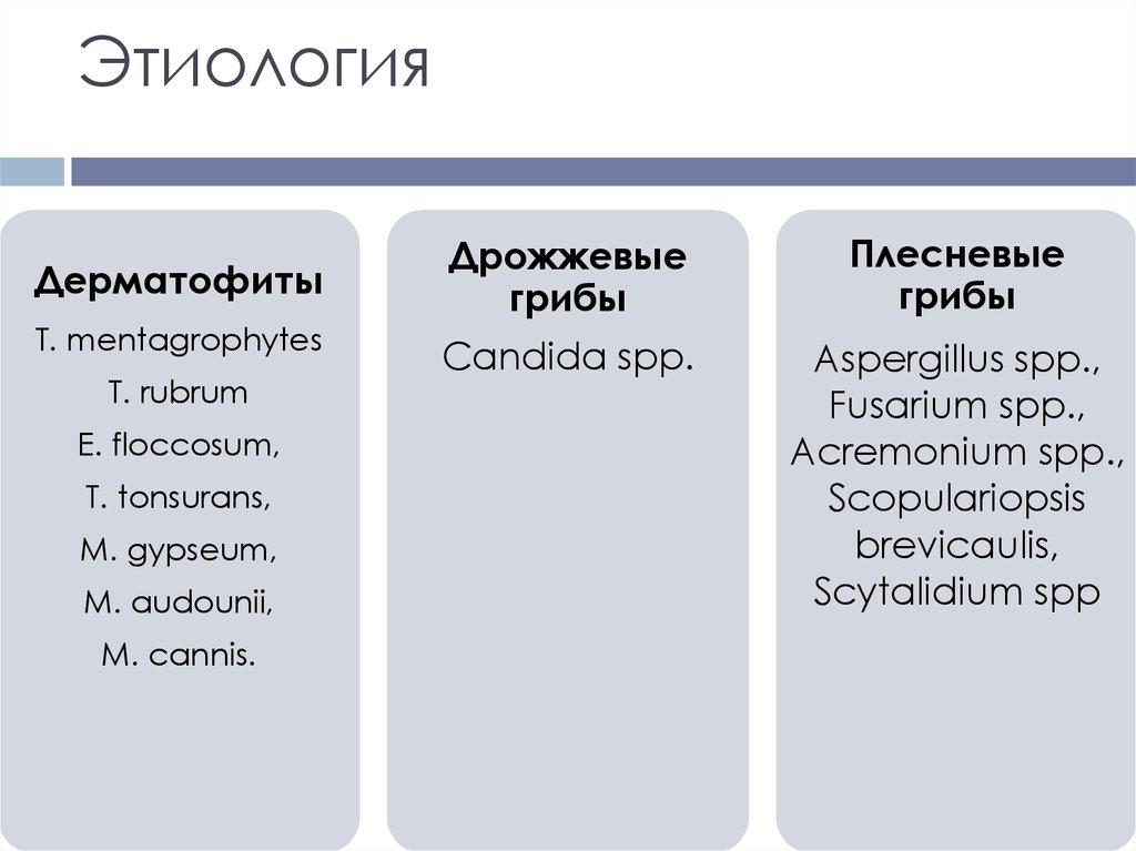 Этиология грибкового поражения ногтей